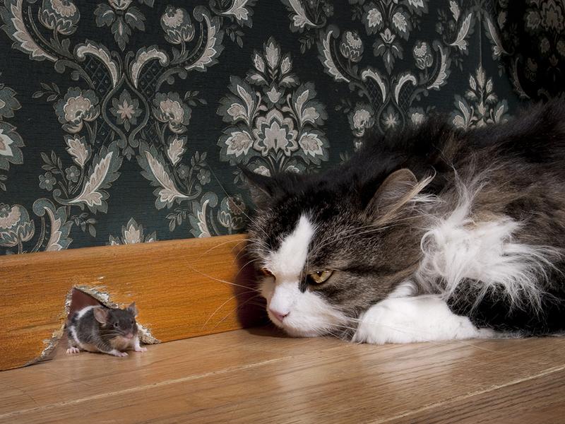 Этот кот точно заслужил почести, не то что на руках нести!