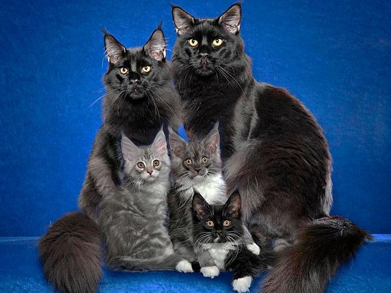 После этого женщина выгнала всех котов из дома!