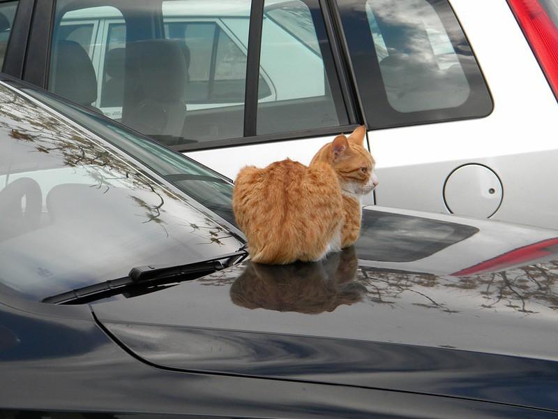 Котик устроил нехилое западло хозяину машины!