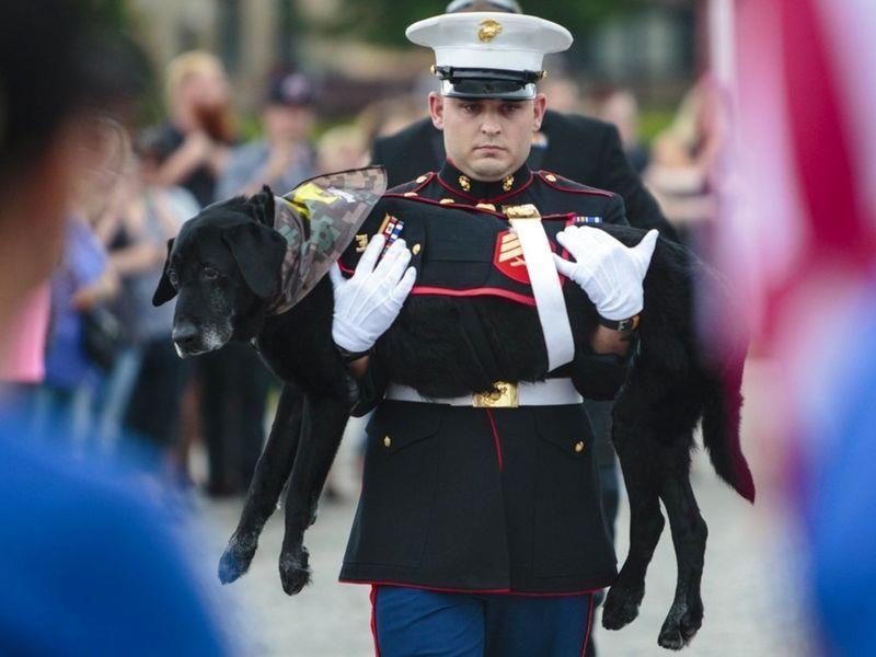 Он подошел к старому ветерану морской пехоты, которого не знал. Это потрясающе!