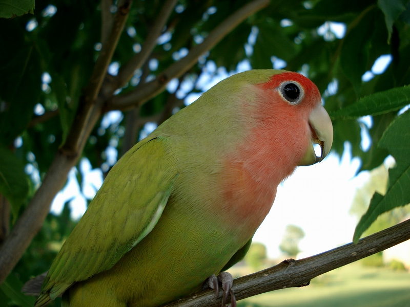 Жена купила в зоомагазине попугая из публичного дома. Когда пришел муж с работы, началось самое веселое!