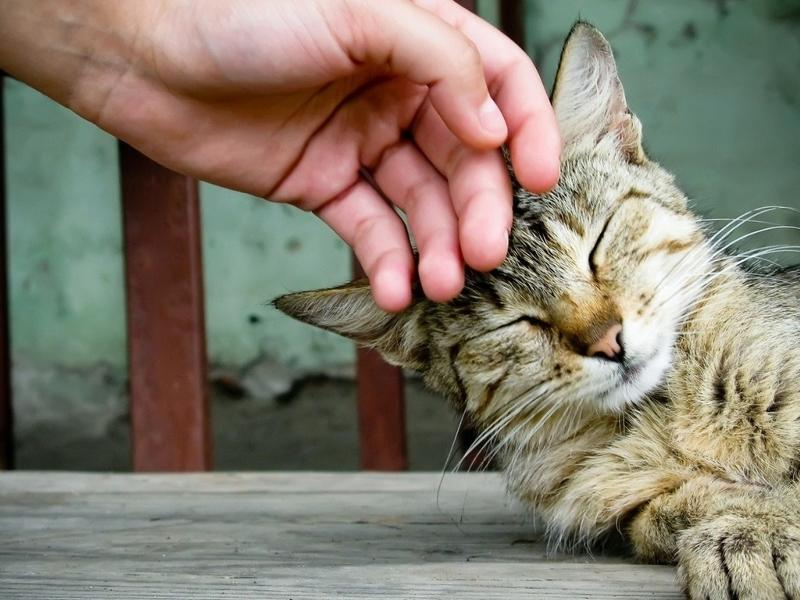 За время отсутствия хозяйки котик порешал всех!