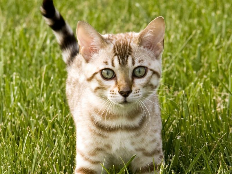 Кот действительно удивит вас своими способностями!