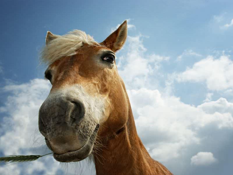 Лошадь оказалась очень даже хитрым животным!