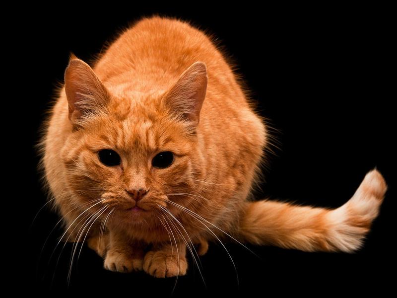 Логика котов иногда заставляет хорошенько задуматься…