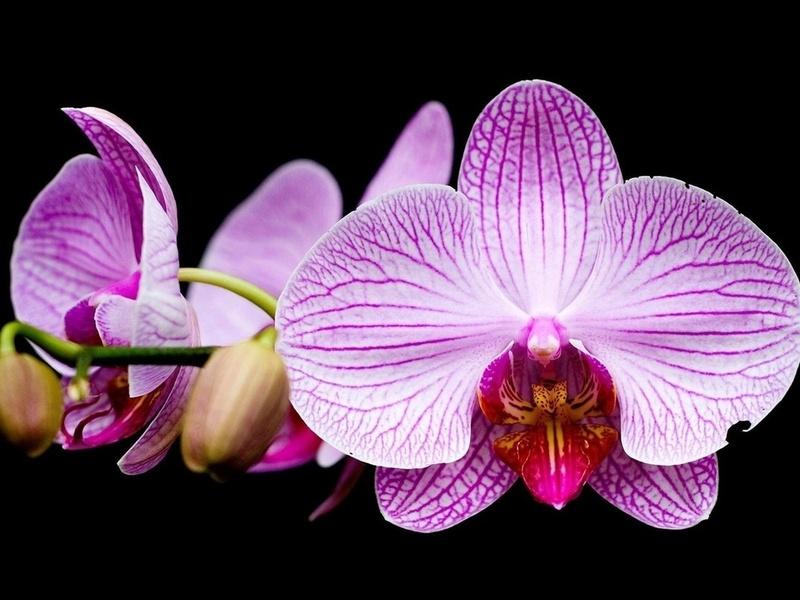 Она попросил милую юную леди купить орхидеи для ее нового дома. Но, через месяц отец пришел со слезами на глазах!
