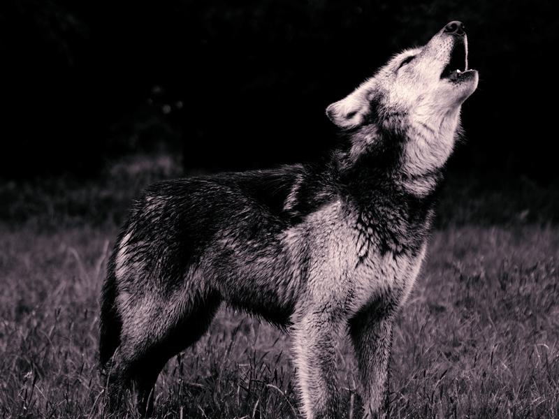 Собака начала лаять каждую ночь примерно в одно и то же время. Причина лая тебя покорит!