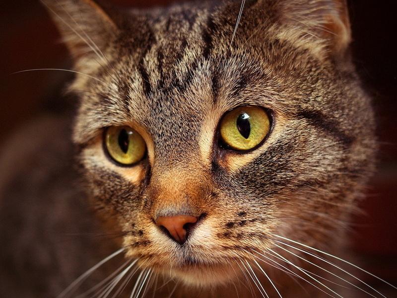 Для кошки это, видимо, много значило!