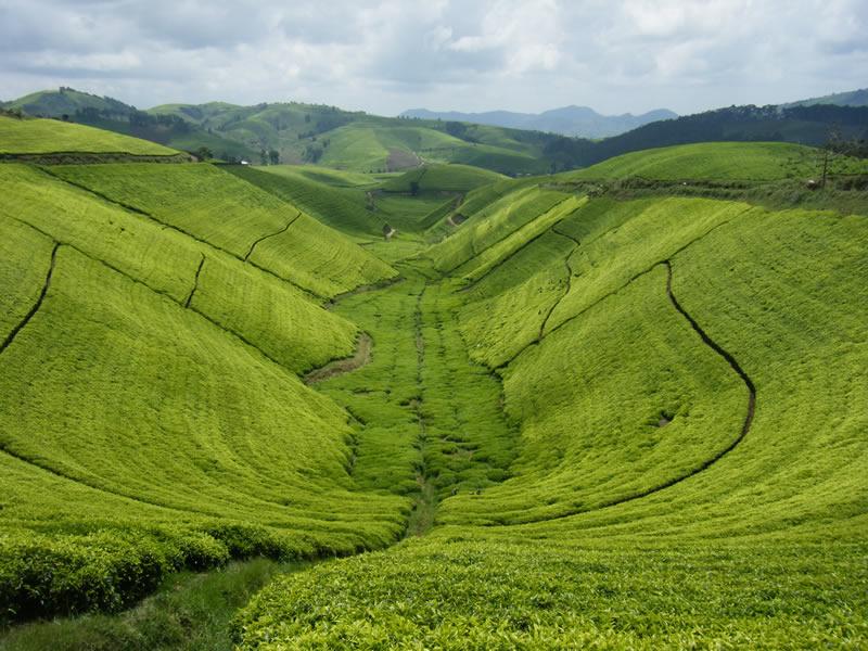 «Ещё пара человек, больше не живущих в Руанде»!