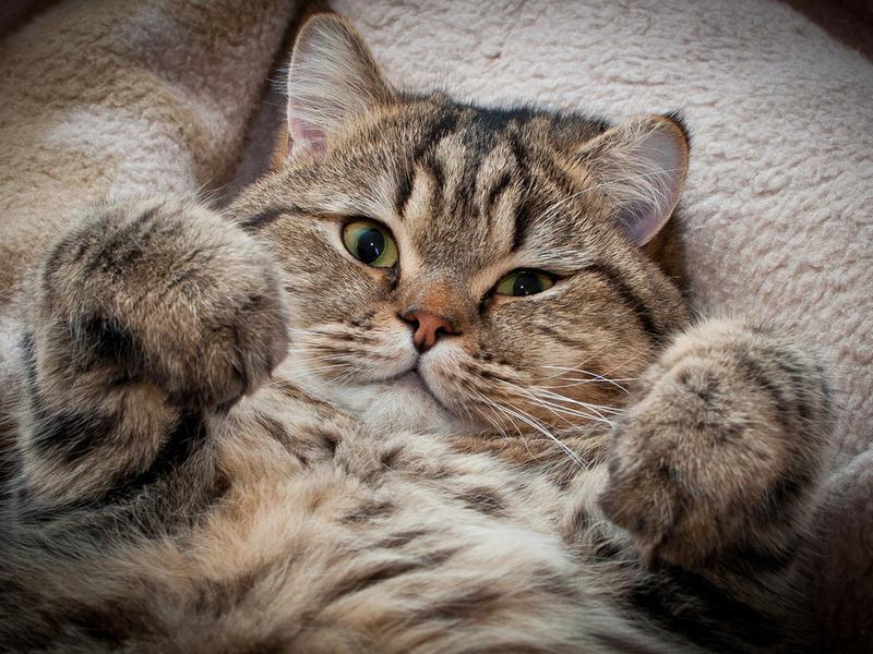 Котики не перестают удивлять своими поступками!