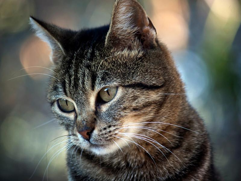 Котик очень удивил мужчину своими потребностями!