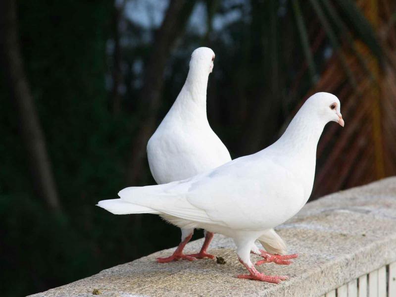 Его очень удивила любовная история птиц!