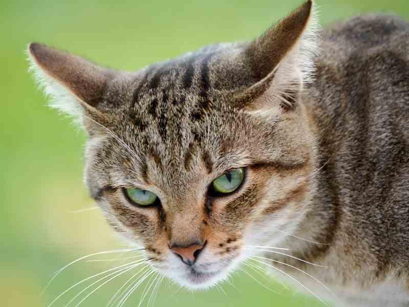 Котик очень заботился о своей любимой! :)