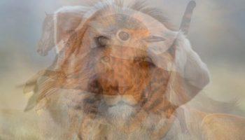 Какое животное вы увидели первым на картинке? Вот что ЭТО говорит о вашей личности