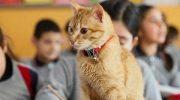 Котик учится в 3 классе и отказывается от еды, когда его не пускают в школу