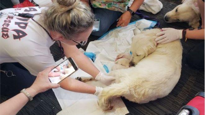 Невероятное утро: Собака стала рожать в зале аэропорта. Роды закончились сюрпризом!