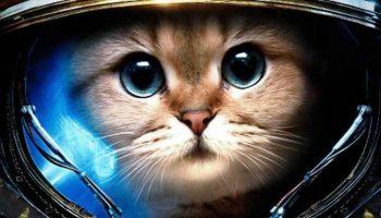 Веселый гороскоп: какой вы кот по Знаку Зодиака?