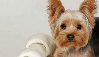 Самая умная собака. Умения данного щеночка приведут любого зрителя в восторг
