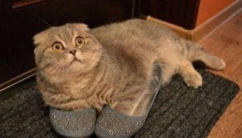 Эти 10 котиков точно не ожидали, что вы вернётесь домой так рано… 🙀