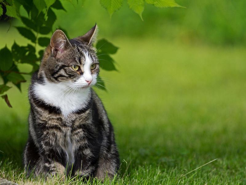 Котик хитро выпрашивал еду у всех посетите!