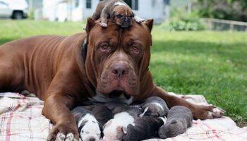 Представляем Вашему вниманию 10 псов, которые очень любят свое потомство!