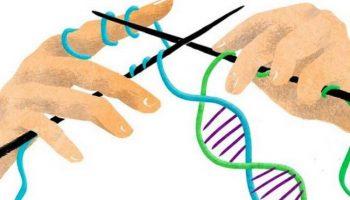 Факты и полезности из мира генетики: идиотизм НЕ передаётся от Папы к Детям