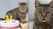 Реально: Самый старый котик в мире отпраздновал 31-ый день рождения!!!