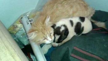 Невероятная история: Кошка принесла с прогулки щенка