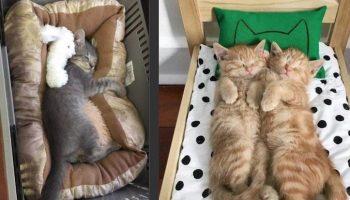 10 котов и кошек, которые сломали систему и таки спят в кроватках!
