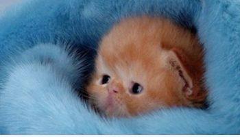 Крошечный котенок «нервничал» во сне. То, что сделала мама-кошка — бесподобно!