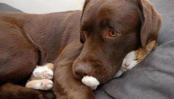 10 cмешных котов, которые заснули в самых неподходящих местах