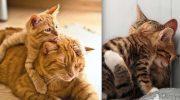 15 фото мам-кошек и их маленьких точных копий