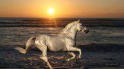 10 прекрасных лошадей, от красоты которых перехватывает дыхание