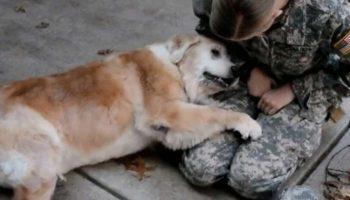 Старый пес не может перестать плакать, когда хозяин-солдат наконец возвращается домой