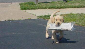 Как верная собака кормила хозяина, который попал в беду и  сломал ногу
