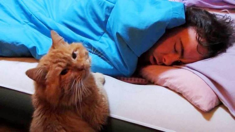 Ежедневно в 05:00 котик будит хозяина самым изощренным способом