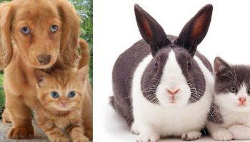 Животные-близнецы «Точные копии» от разных родителей