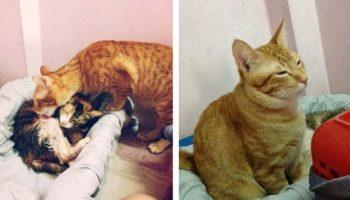 Этот милый Кот покорил сердца миллионов, поддержав свою любимую во время родов!