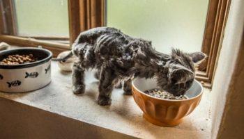 Как из очень тощего скелетика Барли превратился в шикарного кота