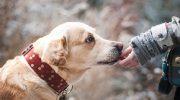 Исследования смогли определить каким образом собаки распознают плохих людей