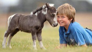 10 крошечных лошадок-пони, похожих на игрушки