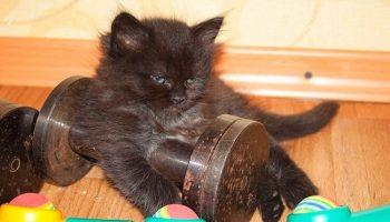 20 доказательств того, что котики многогранны и талантливы