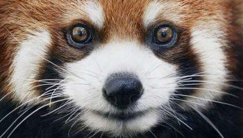 Парень несколько лет фотографировал исчезающих зверей. Как жаль, что мы их больше никогда не встретим…