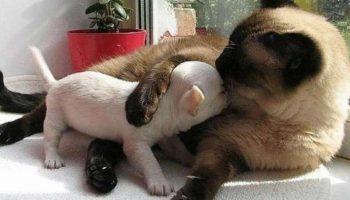 Рушим мифы: Доказательства того, что каждой кошке нужен друг — своя собака!