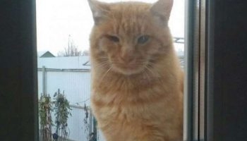 Худой больной кот постоянно приходит к окну и смотрел, как живут люди