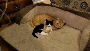 Мужчина спас маленького котенка и хотел отдать его кому-то, но его кот решил иначе