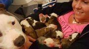 Милота: Песик приносит новорождённых щенков своей хозяйке!