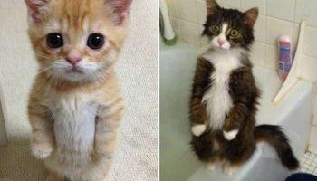 10 смешных котов, которые умеют стоять на своих задних лапках
