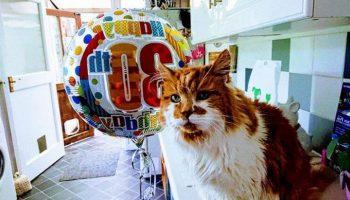 Этот веселый котик отмечает свой юбилей «30-летие»