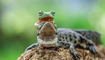 Таких лягушек вы еще не видели: Индонезиец снимает невероятные вещи